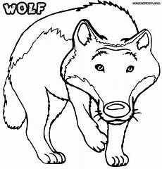 wolf coloring pages coloring pages to and print