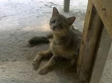 Kucing Jalanan Pun Ada Yang Macam Mamat Kelabu