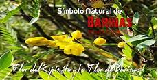 flor simbolos naturales del estado barinas consejo legislativo del estado barinas noticias