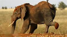 wildlife topics african wildlife conservation and kenya s wildlife policy act council on foreign relations