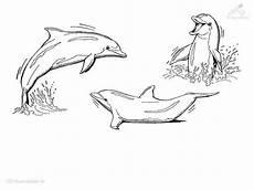 Delphin Malvorlagen Zum Ausdrucken Junior Ausmalbilder Delphin Zum Ausdrucken Delphinzeichnung