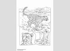 Kleurplaat cheetah. Gratis kleurplaten om te printen.