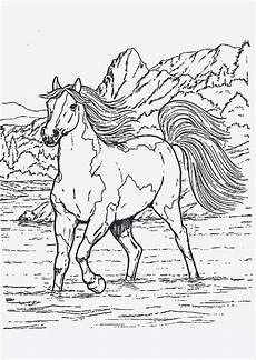 ausmalbilder pferde springen