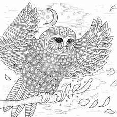 ausmalbilder tiere eule zeichnen und f 228 rben