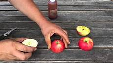 wann sind äpfel reif wann sind die 196 pfel reif