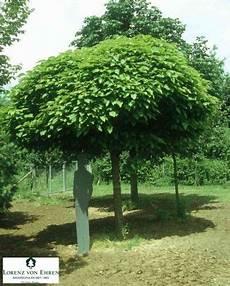 6 arbres qui sont vraiment adapt 233 s pour un petit jardin