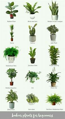 by mark kk plants inside plants indoor plants