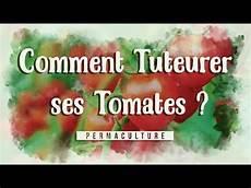comment tuteurer ses tomates