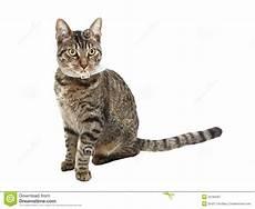 Malvorlage Sitzende Katze Sitzende Katze Stockbild Bild Katzenartig Heck