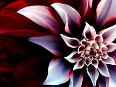flower wallpaper on wallpaper proslut flower wallpapers