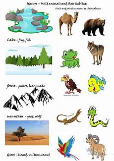 animals and their habitats worksheet free esl printable worksheets made by teachers