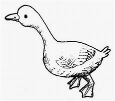 Dunia Sekolah Gambar Hitam Putih Drawing Binatang