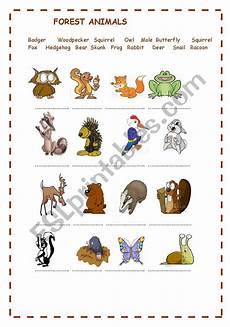 rainforest animals worksheets elementary 13860 forest animals esl worksheet by macanolo