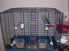 gabbia cocorite i 5 consigli per scegliere una gabbia adatta alle cocorite
