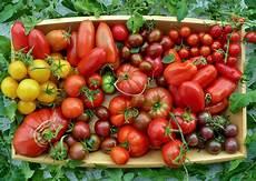 Tomaten Verschiedene Sorten Fleurcuisine De