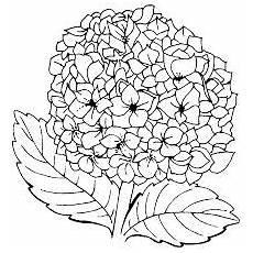 Malvorlagen Hawaii Blumen Image Result For Malvorlagen Blumen Malvorlagen F 252 R