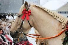 49 Gambar Kuda Putih Paling Bagus Kembang Pete