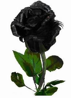 Gambar Bunga Mawar Hitam Gambar Bunga