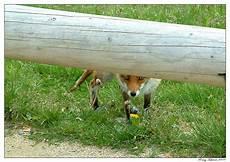 Tschirner Und Fuchs - brocken fuchs foto bild tiere wildlife s 228 ugetiere