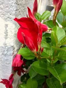pflanze mit roten blüten kann jemand diese pflanze mit roten bl 252 ten bestimmen