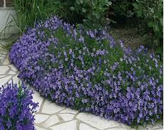fleur exterieur sans entretien plantes exterieur sans entretien gallery of on ne