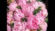 ca fiore le peonie fiori meravigliosi