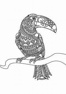 Ausmalbilder Erwachsene Vogel Vogel 42328 V 246 Gel Malbuch Fur Erwachsene Verwandt Mit