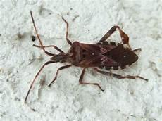 Insekten Resort Oktober 2011
