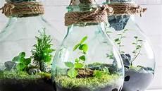 pflanzen im glas so einfach baust du dein ewiges