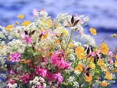 maprox hd 20 beautiful flowers wallpapers