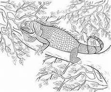 Ausmalbilder Reptilien Malvorlagen Malvorlage Gratis Ausmalbilder Adler Bild Malvorlage