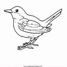 Malvorlage Vogel Zum Ausdrucken Singvogel 02 Gratis Malvorlage In Tiere V 246 Gel Ausmalen