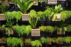 Living Wall Create A Vertical Garden Doityourself