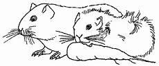 Meerschweinchen Ausmalbilder Malvorlagen Hamster Meerschweinchen Murmeltier