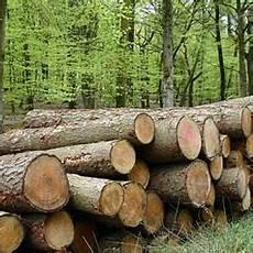 Pentingnya Hutan