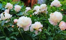 Floraqueen Deutschland