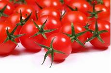 tomaten 187 welche temperatur haben sie am liebsten