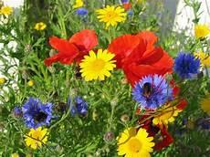 fiori di giugno fiori di giugno fiorista come scegliere i fiori a giugno