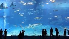 sedere piu bello al mondo i 5 acquari pi 249 grandi e belli al mondo posti da