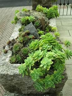 sukkulenten winterhart balkonkasten winterharte dickblattpflanzen tipps und tricks f 252 r haus