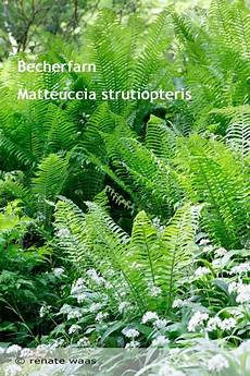 welche pflanzen klären den teich gartenblog geniesser garten pflanzen fuer den teich