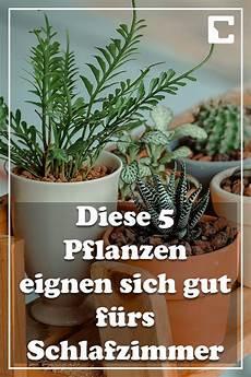Pflanzen Im Schlafzimmer Das Sollten Sie Wissen