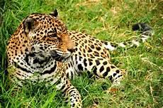 top 10 deadliest animals in costa rica javi s travel