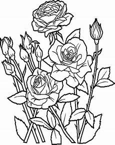 Sketsa Gambar Bunga Dari Biji Bijian Koleksi Gambar Bunga Free Photos