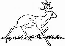 coloring pages animals in the forest 17029 whitetail deer line drawing sketch coloring page