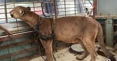 animali in gabbia da circo in gabbia per 20 lunghi anni guarda la sua