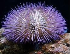 Aneka Makhluk Hidup Laut Dan Manfaatnya Tiada Masalah