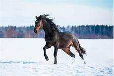 Ausmalbilder Pferde Im Winter Pferd Und Reiter Ger 252 Stet F 252 R Den Winter Futureconcepts