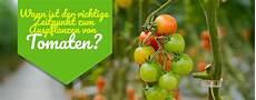 ᐅ Tomaten Auspflanzen Ins Freie Wann Darf Ich 2019 Setzen