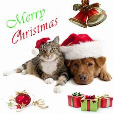 merry christmas pet pictures merry christmas pics aruba animal shelter